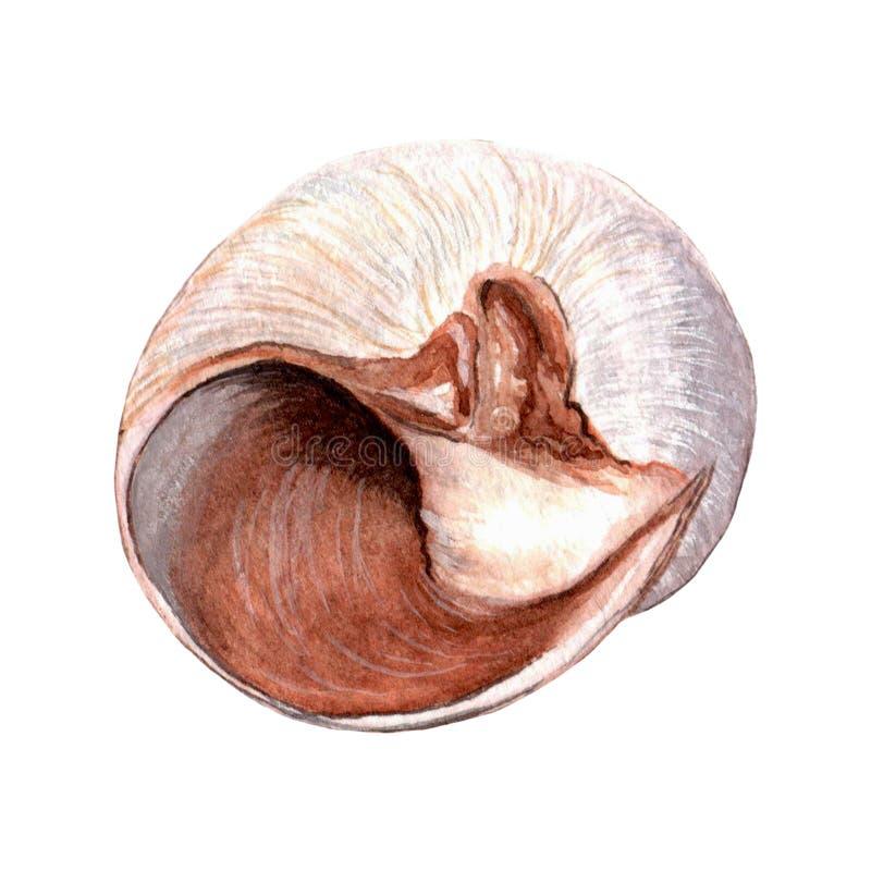Seashells акварели нежные иллюстрация штока