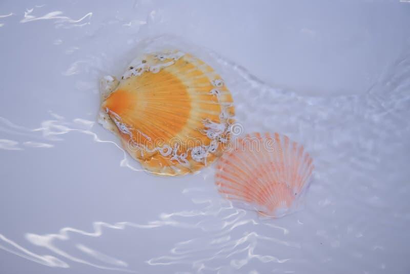 2 seashells в открытом море с предпосылкой и белизной струились вода стоковое фото rf