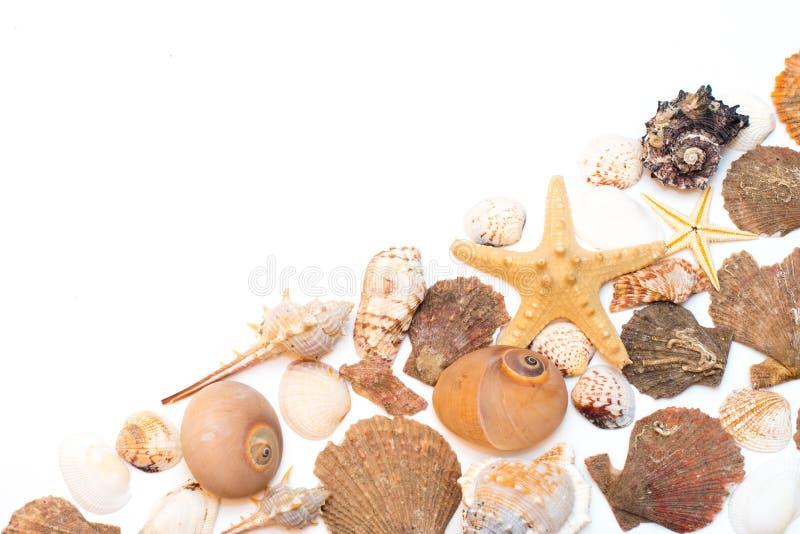 Seashells и морские звёзды изолированные на белой предпосылке стоковая фотография