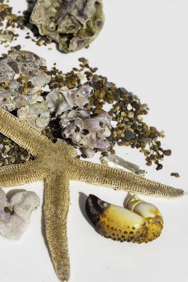 Seashells, коготь краба, камни, кораллы, морские звёзды на белой предпосылке, зачатии перемещения, селективном фокусе стоковые фото
