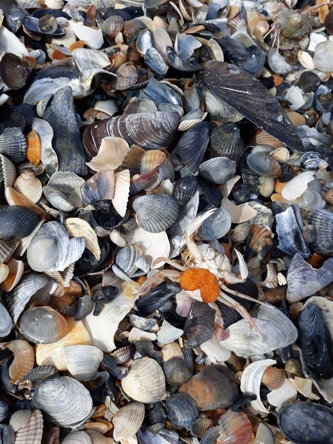 Seashells на пляже стоковые фотографии rf