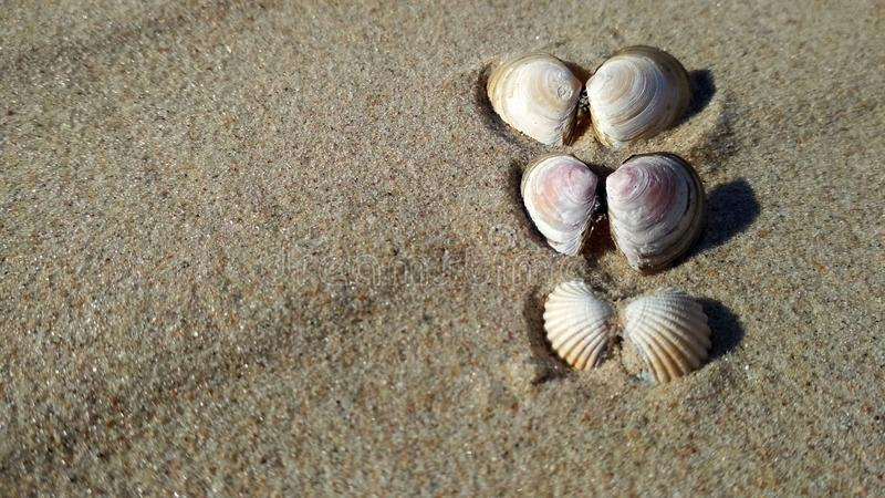 Seashells на солнечном seashore стоковая фотография rf