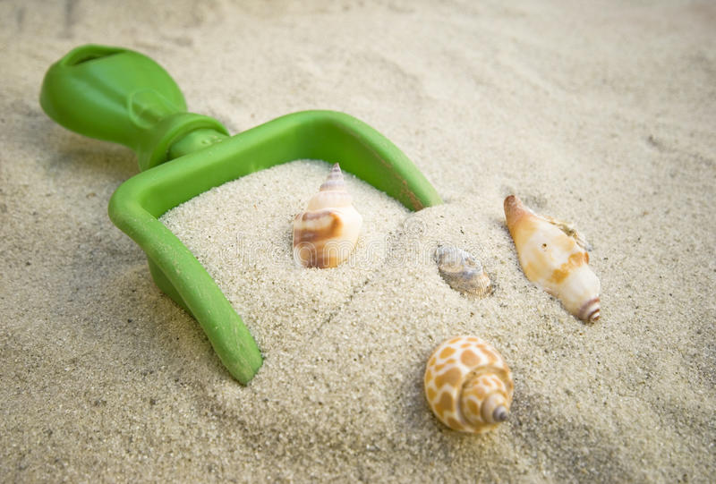seashells песка стоковое фото