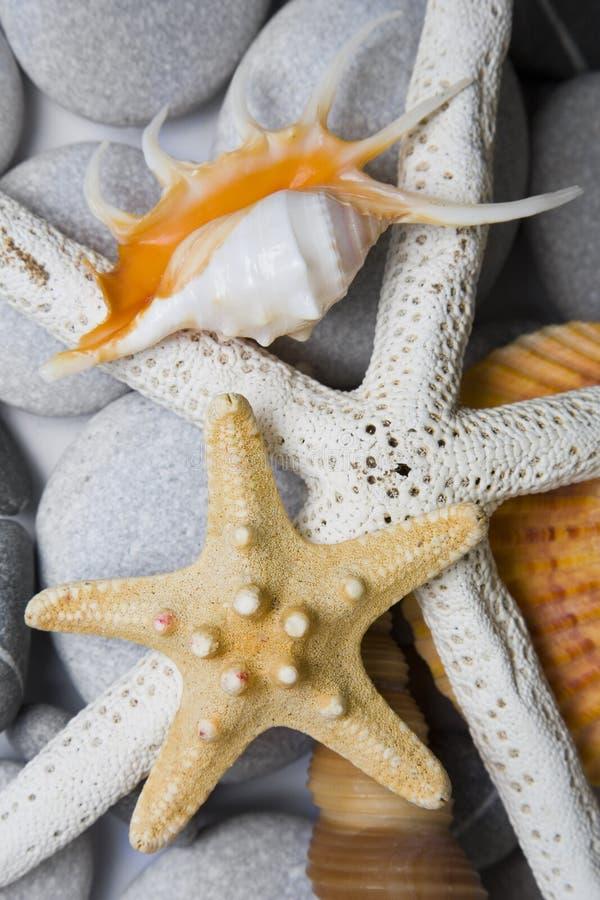 seashells светлого тонового изображения стоковые изображения