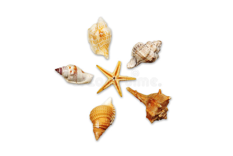 Download Seashells 01 Royalty Free Stock Photography - Image: 22622677
