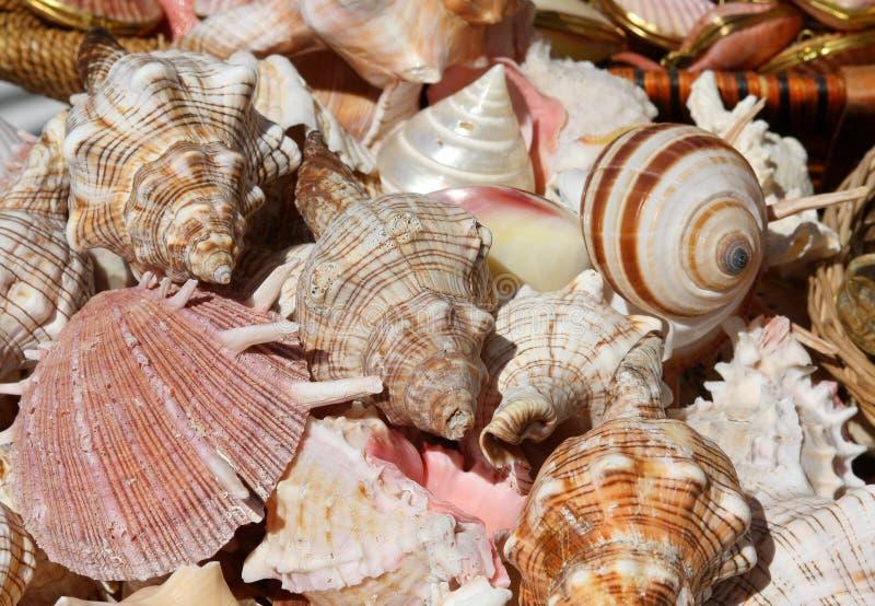 Seashells fotografia de stock
