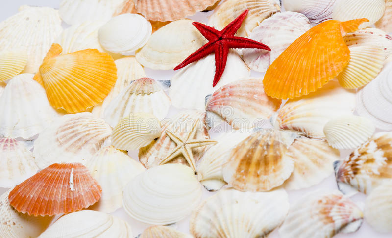 Download Seashells stock image. Image of crustaceans, indoor, mollusk - 14885417