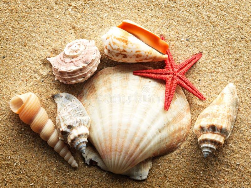 Seashells fotografía de archivo