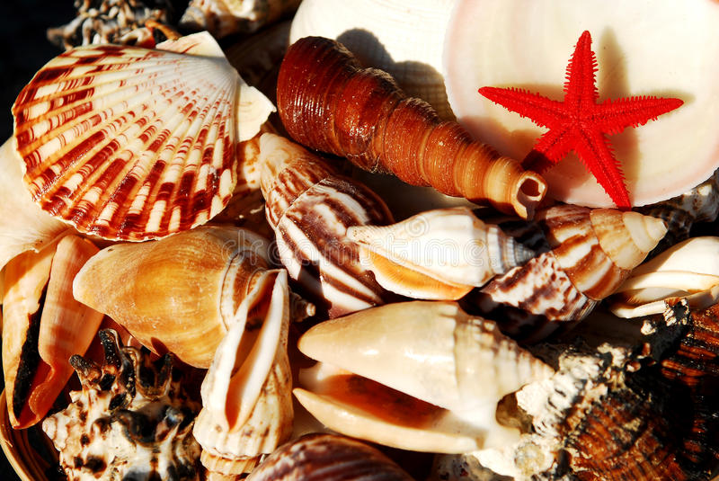 Seashells. A wide variety of shells and a starfish photographed at the beach royalty free stock photos