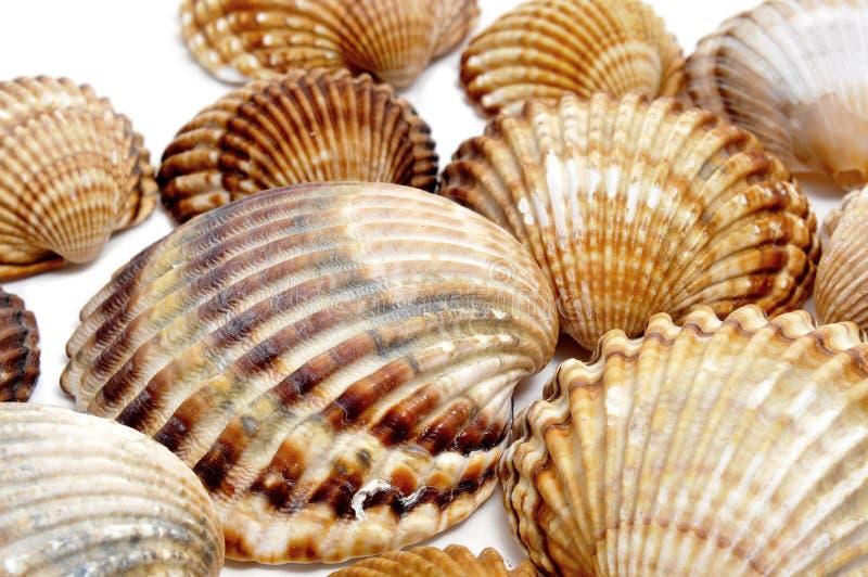 Seashells fotos de stock