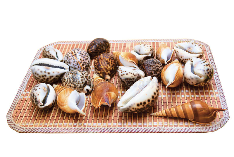Download Seashells stock image. Image of decorative, life, colorful - 19638733