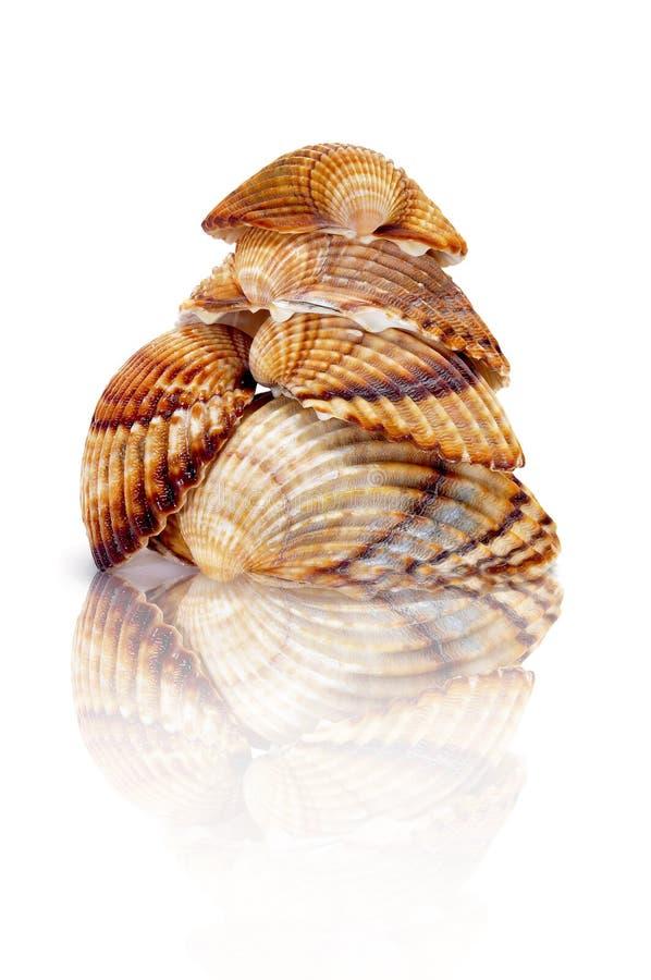 Seashells immagine stock