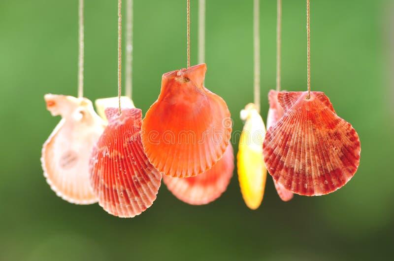 Seashells images libres de droits