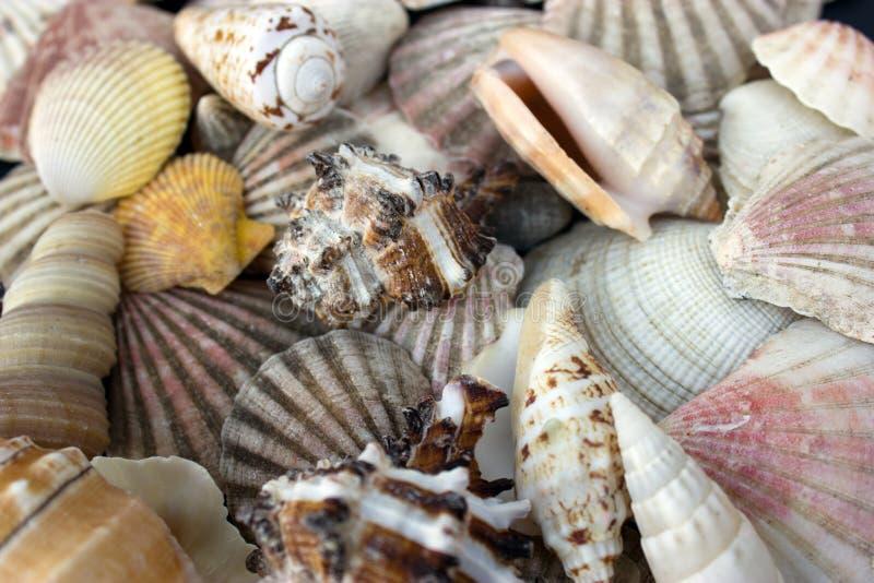 Download Seashells Royalty Free Stock Photos - Image: 21679838
