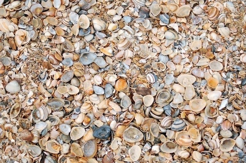 Seashells stockfoto