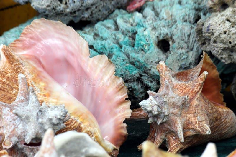 Seashells foto de archivo libre de regalías