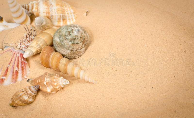 Seashells images stock