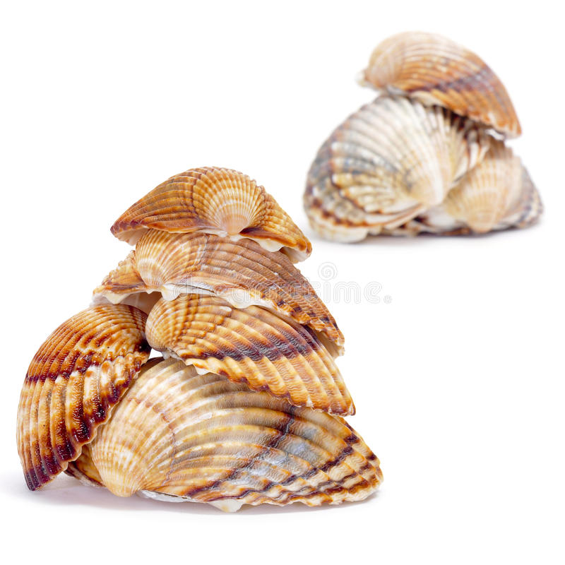 Seashells foto de stock