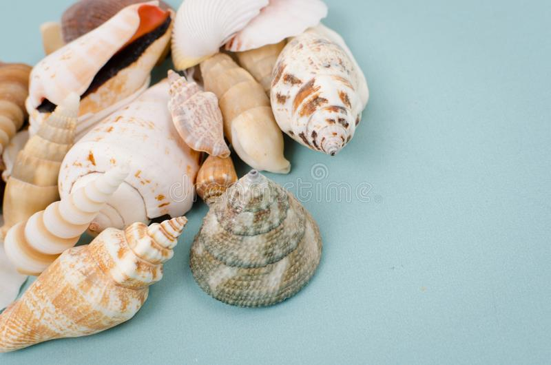 Seashells photo libre de droits