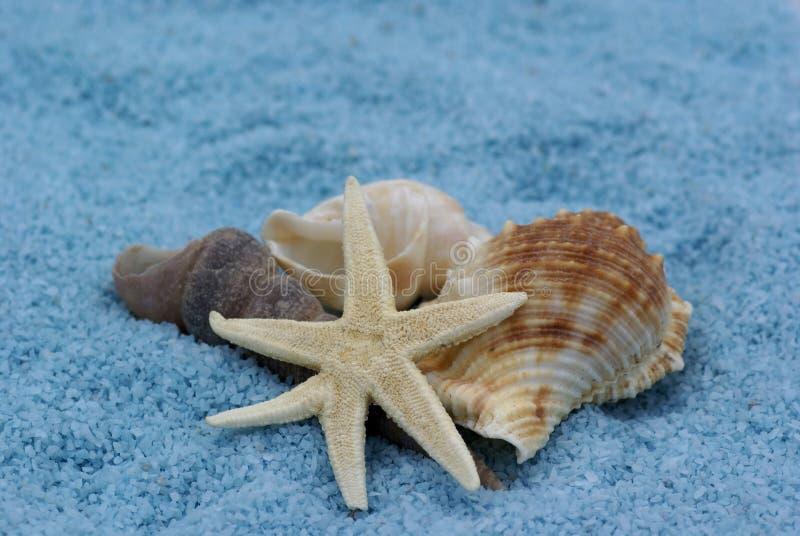 Seashells. fotografie stock libere da diritti