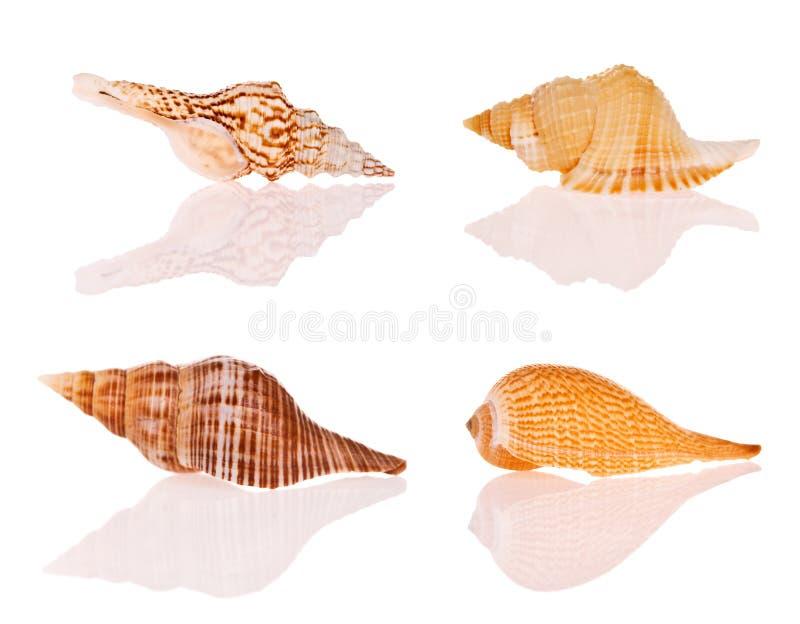 Seashells photo stock