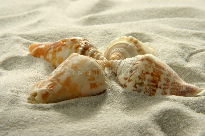 Seashells (3) stockfotografie