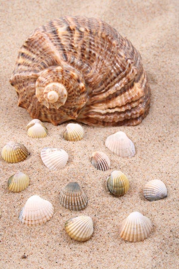 Seashells imagen de archivo