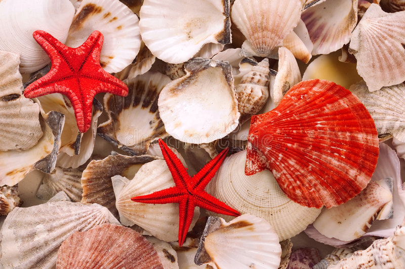 Seashells stockfotografie