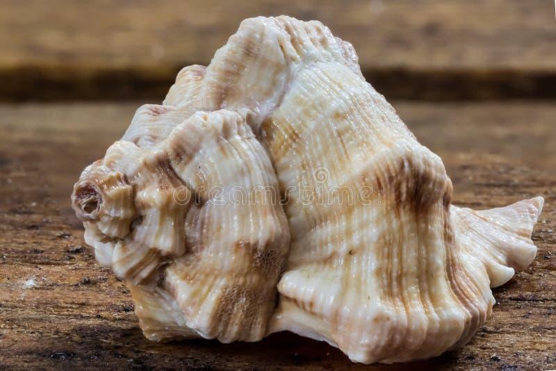 seashells fotografia royalty free