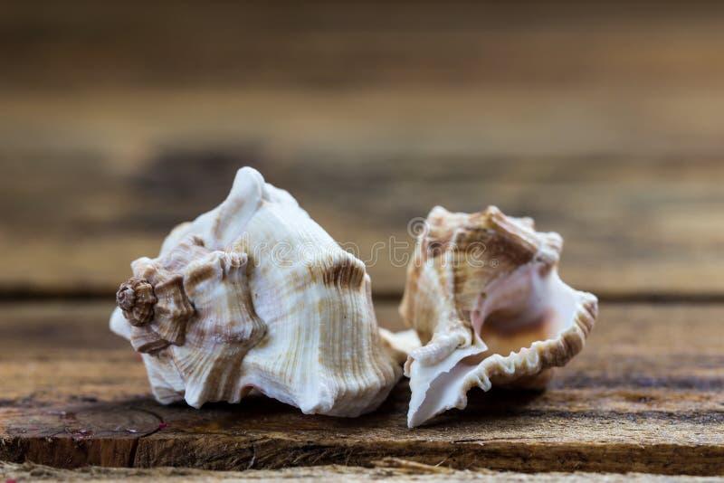 seashells obraz stock