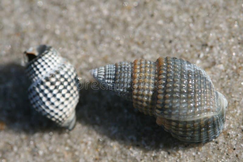 Download Seashells imagen de archivo. Imagen de desigual, océano - 7151049
