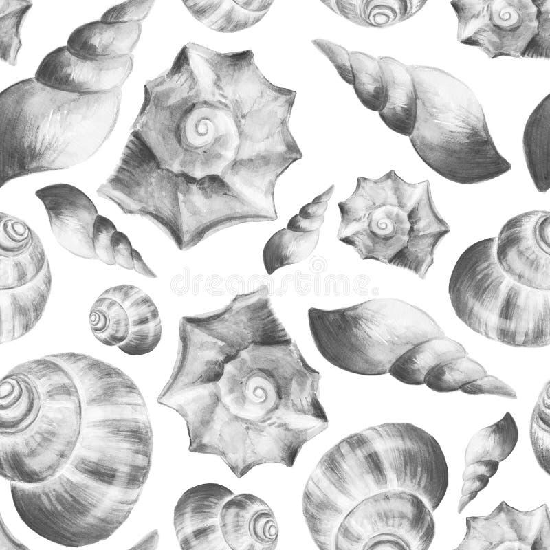 2 seashells illustration libre de droits