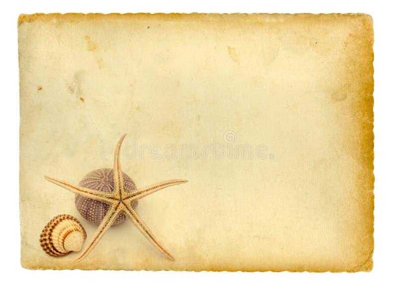 Download Seashells stock abbildung. Illustration von getrennt, speicher - 7645587