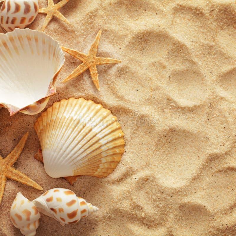 Free Seashells And Sand Royalty Free Stock Image - 87626856