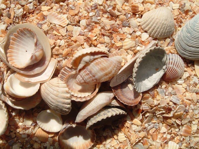 Seashells auf Lied lizenzfreie stockbilder