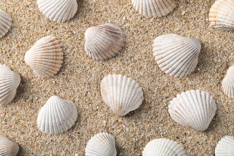 Seashells Background. Seashells on the sand, summer beach background stock image