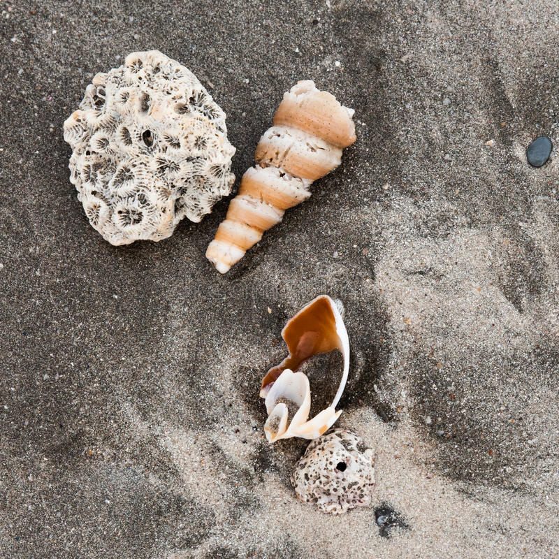 Download Seashells on a beach stock photo. Image of vacation, close - 29424226