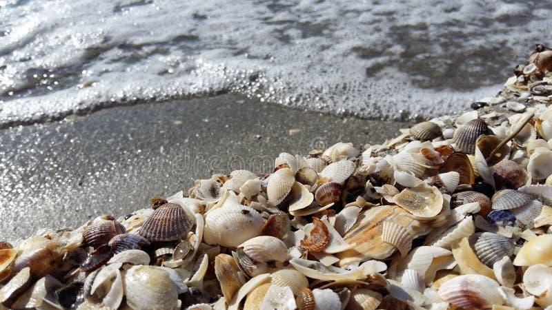 Seashells. On the beach royalty free stock image