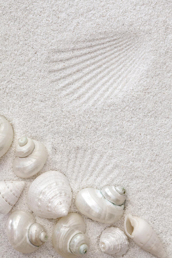Seashells bianchi sulla sabbia bianca fotografia stock libera da diritti