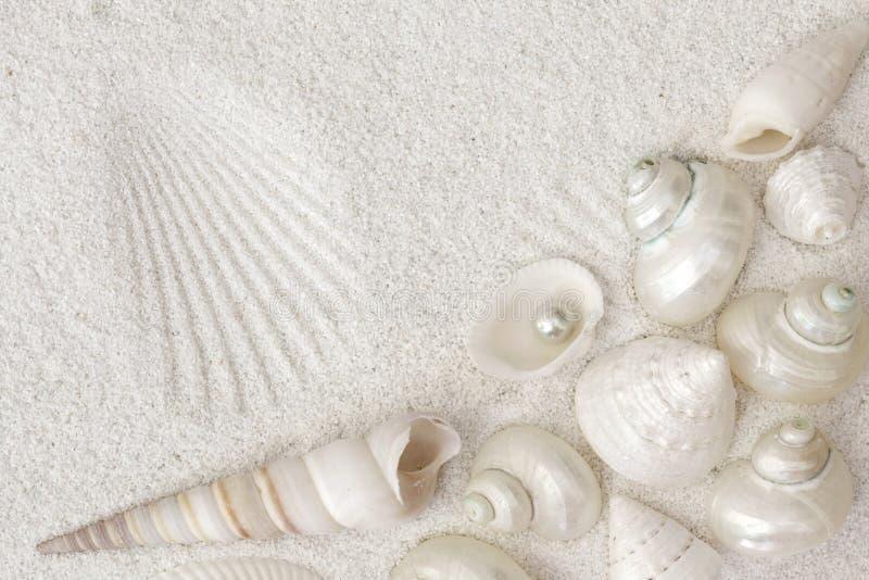 Seashells blancos foto de archivo libre de regalías