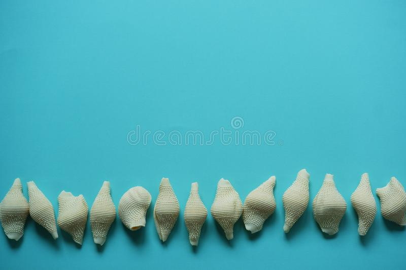 Seashells on blue background top view. Seashells on row blue background seasonal colorful summer top view vacation conceptuel stock photos