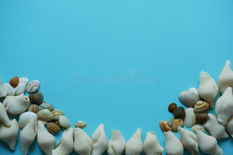 Seashells on blue background top view. White brown shells stripes decoration conceptuel stock photo