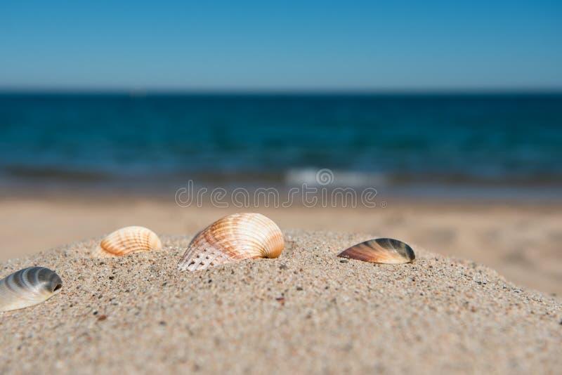Seashells close-up on a sandy beach against the sea background. Seashells close-up on a sandy beach against the sea and sky background stock photography