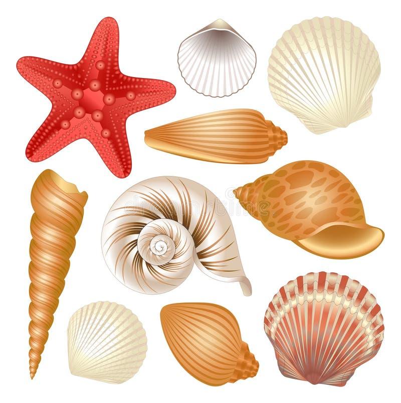 Seashells collection. Colorful set of seashells and red starfish stock illustration