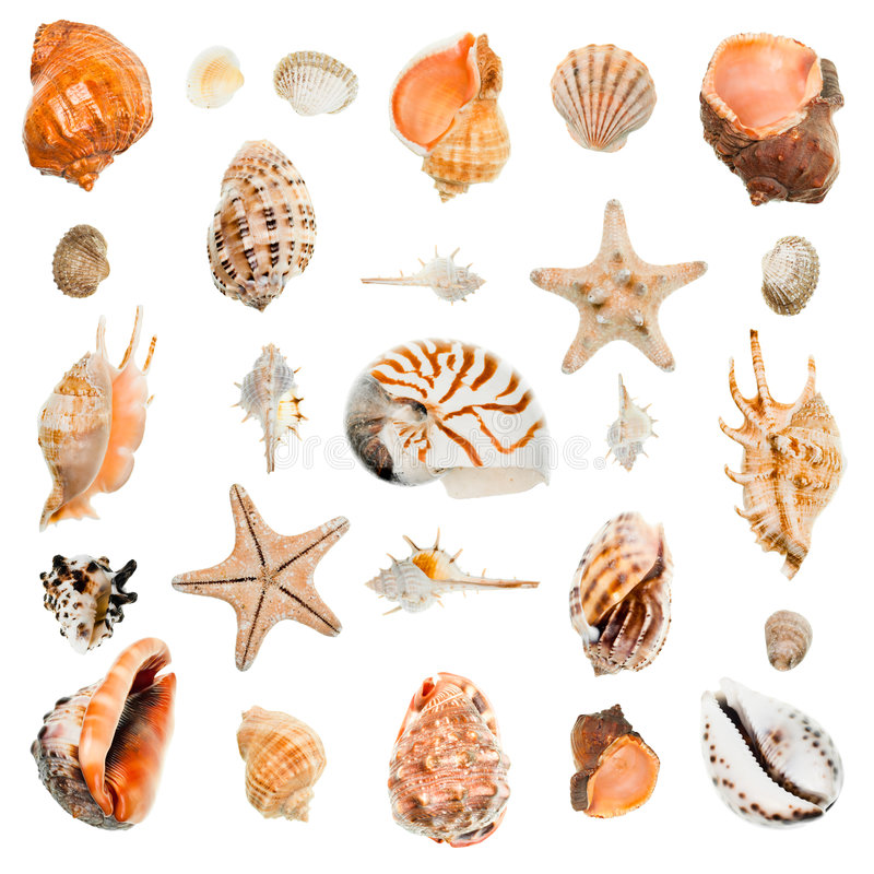 Download Seashells Collection Royalty Free Stock Images - Image: 7715649