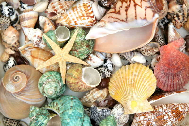 Seashells coloridos fotografia de stock
