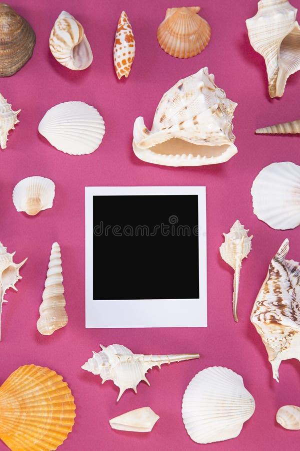 seashells fotografie stock
