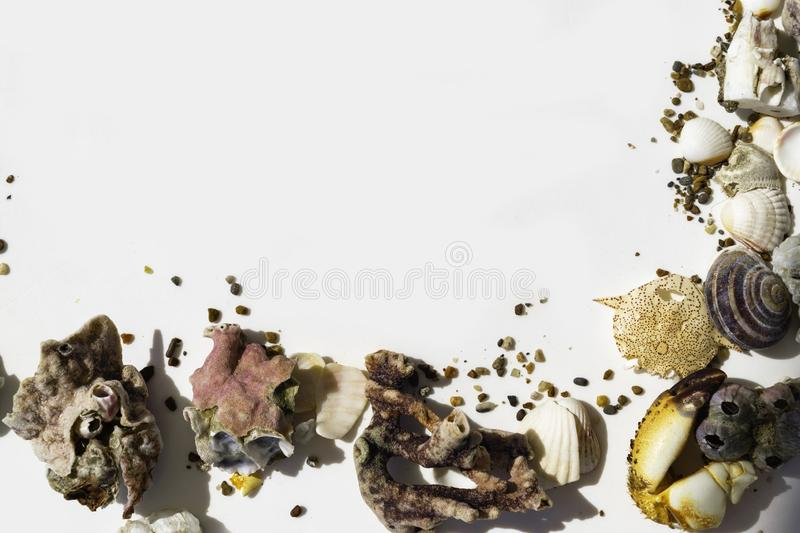 Seashells, crab claw, stones, corals on white background, travel conception, selective focus stock photography
