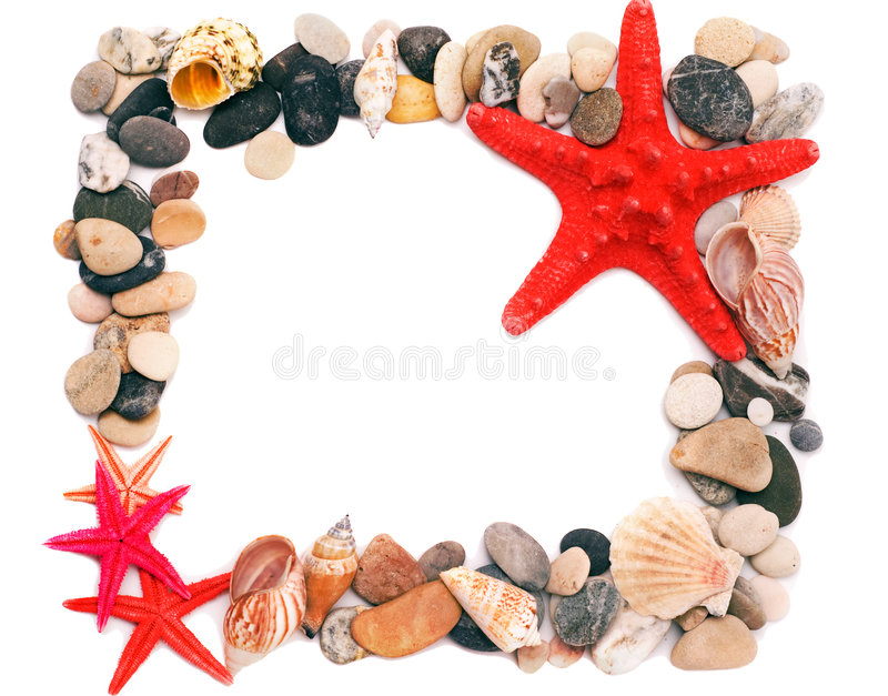 Download Seashells De Sable D'illustration De Trame Photo stock - Image du corail, perdu: 8663850