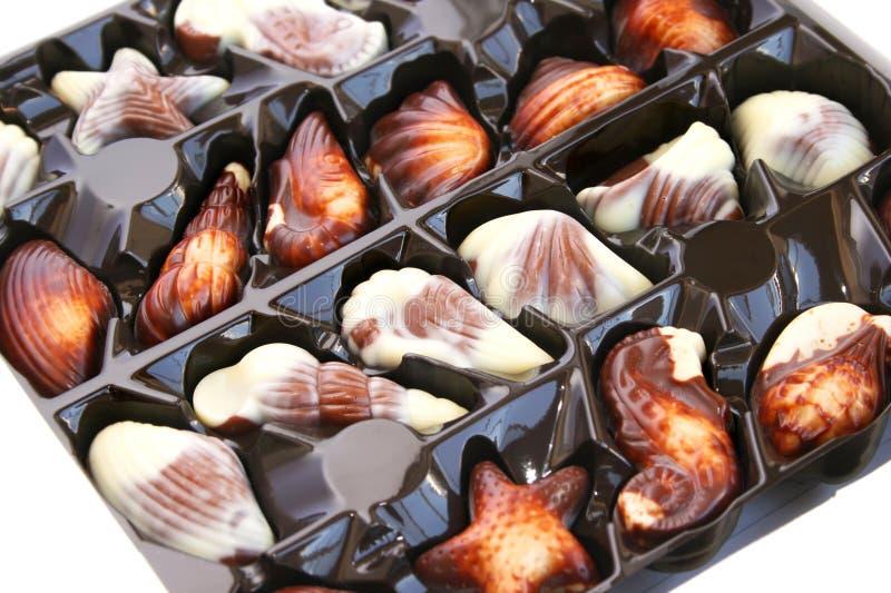 Seashells del cioccolato immagini stock libere da diritti